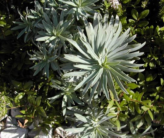 Cime les travaux des coles de marseille for Plante urticante